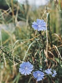 PowellButte_Wildflowers